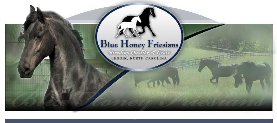 Friesian Horse Breeders in North Carolina